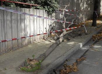 Crolla albero a Piano di Sorrento