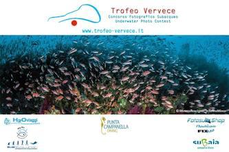 """A Massa il """"Trofeo Vervece"""": la gara di fotografia subacquea"""