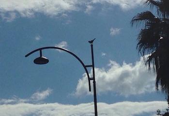Sagome di uccellini sui pali della luce: il kitsch a Meta è sempre di moda