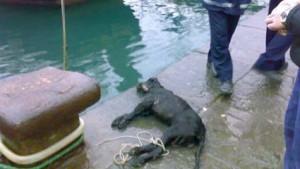 cane-acqua