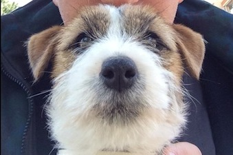 Microchip gratis per i cani a Vico Equense