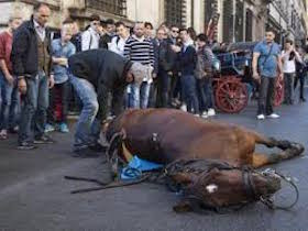 Il cavallo morto in strada a Roma