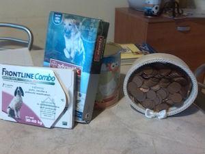 """""""Dateci le monetine per salvare i cani"""": iniziativa di due bimbi di Sorrento"""