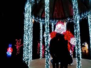 """Luminarie e addobbi natalizi: Meta si gode il suo """"giardino delle meraviglie"""""""