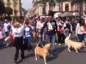 A Sorrento terza edizione della Maratona a 6 zampe – video –
