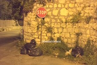Sacchi di rifiuti da giorni in strada: Perché non vengono raccolti?