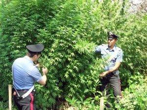 Monti Lattari: trovate 2000 piante di cannabis