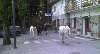 Cavalli ed asini randagi sul Faito, si cercano i proprietari