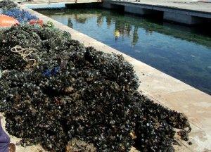 Oltre 15 tonnellate di cozze sequestrate in Provincia di Napoli