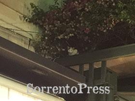 Un gattino attira sguardi in piazza Tasso