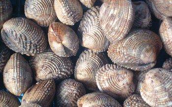 Un quintale e mezzo di molluschi sequestrati in una pescheria di Piano