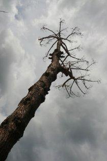 Continua il massacro di alberi in penisola sorrentina