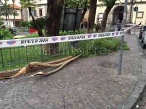 Cadono rami, transennata piazza Sant'Antonino