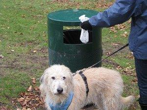 """L'Ascom: """"I proprietari devono lavare le deiezioni dei cani"""""""
