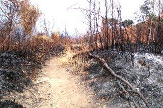 Cosa c'è dietro gli incendi di Monte Faito?
