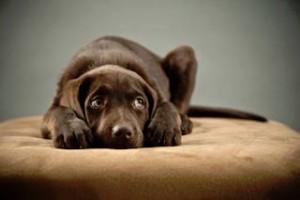 cane-spaventato-botti