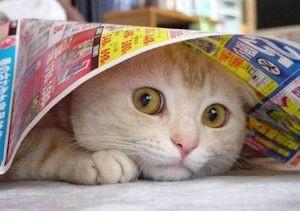 gatto-spaventato-botti