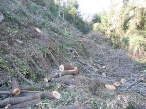 La Curia ordina di abbattere un intero bosco, la denuncia del Wwf