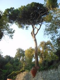 pino-meta-amalfi1
