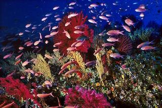 Biologia marina, al via i corsi del Parco di Punta Campanella