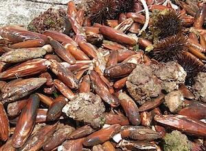 Pescatori di frodo di datteri bloccati a Sorrento