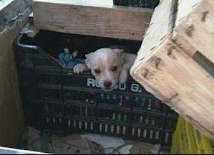 Garage-lager per cuccioli di cane scoperto a Piano di Sorrento