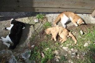 Strage di gatti a Meta, forse avvelenati