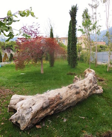 """Un albero morto """"rubato"""" per adornare il nuovo giardino pubblico"""