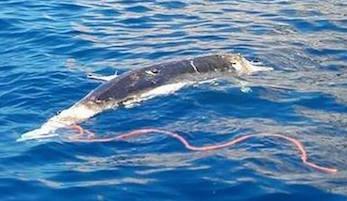 Il Parco di Punta Campanella per la convivenza tra delfini e pescatori