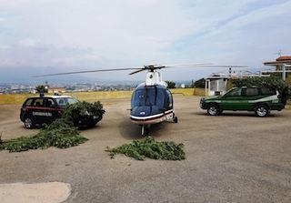 Piantagione record di cannabis scoperta sui Monti Lattari