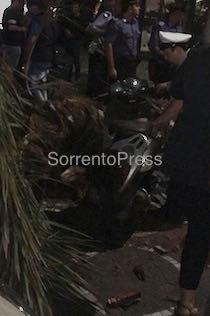 Palma caduta in piazza Lauro, affondo del Wwf