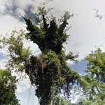 taglio-alberi-nastro-verde-3