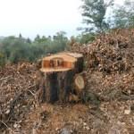 taglio-alberi-nastro-verde-4