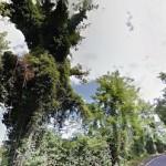 taglio-alberi-nastro-verde-5