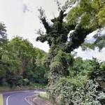 taglio-alberi-nastro-verde-7