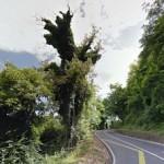 taglio-alberi-nastro-verde-8