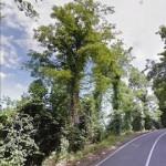taglio-alberi-nastro-verde-9