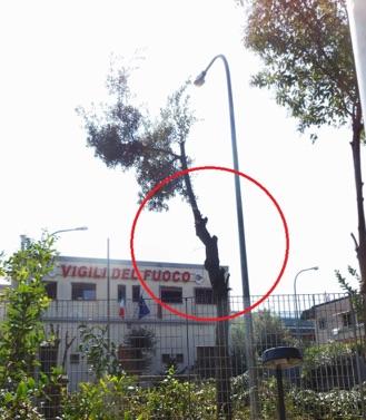 """""""Alberi danneggiati dai pompieri"""", denuncia del Wwf"""