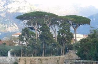 Alberi abbattuti a Villa Fondi, verifiche dei carabinieri forestali