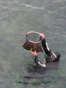 La Capitaneria denuncia 11 persone per la pesca di datteri