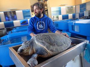 Salvata una tartaruga intrappolata nelle reti