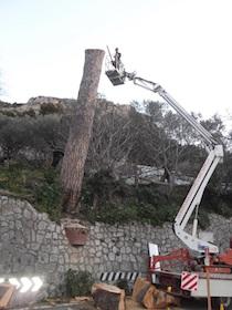 abbattimento-pino-statale-amalfitana-1