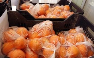 Iniziativa solidale con le arance della Villa Fiorentino di Sorrento