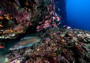Dalla Florida per studiare la biodiversità di Punta Campanella