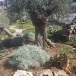 oasi-mediterranea-sant'agnello-2