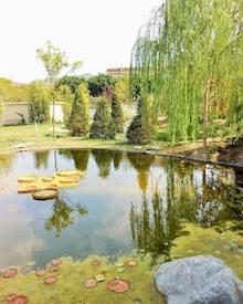 Si parla di verde e natura in un incontro con il Wwf e gli esperti a Sant'Agnello