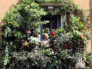 In costiera un concorso per i balconi fioriti più belli