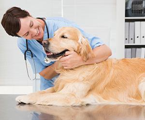 Servizi veterinari, entro 20 giorni la ripresa dell'attività