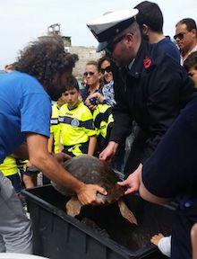 Tre tartarughe liberate a Massa Lubrense – foto –