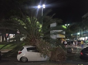 Palma caduta in piazza Lauro, Wwf contro Comune